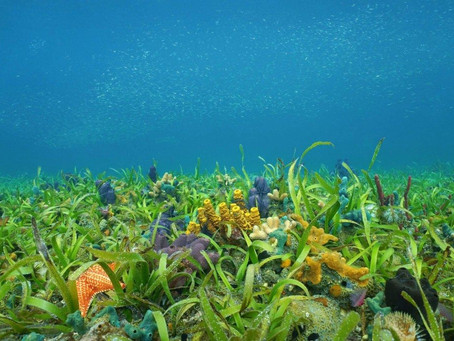 Corals and Seagrass: The Two Besties of the Sea