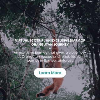 VIRTUAL ECOTRIP : AN EXCLUSIVE DIARY OF ORANGUTAN JOURNEY