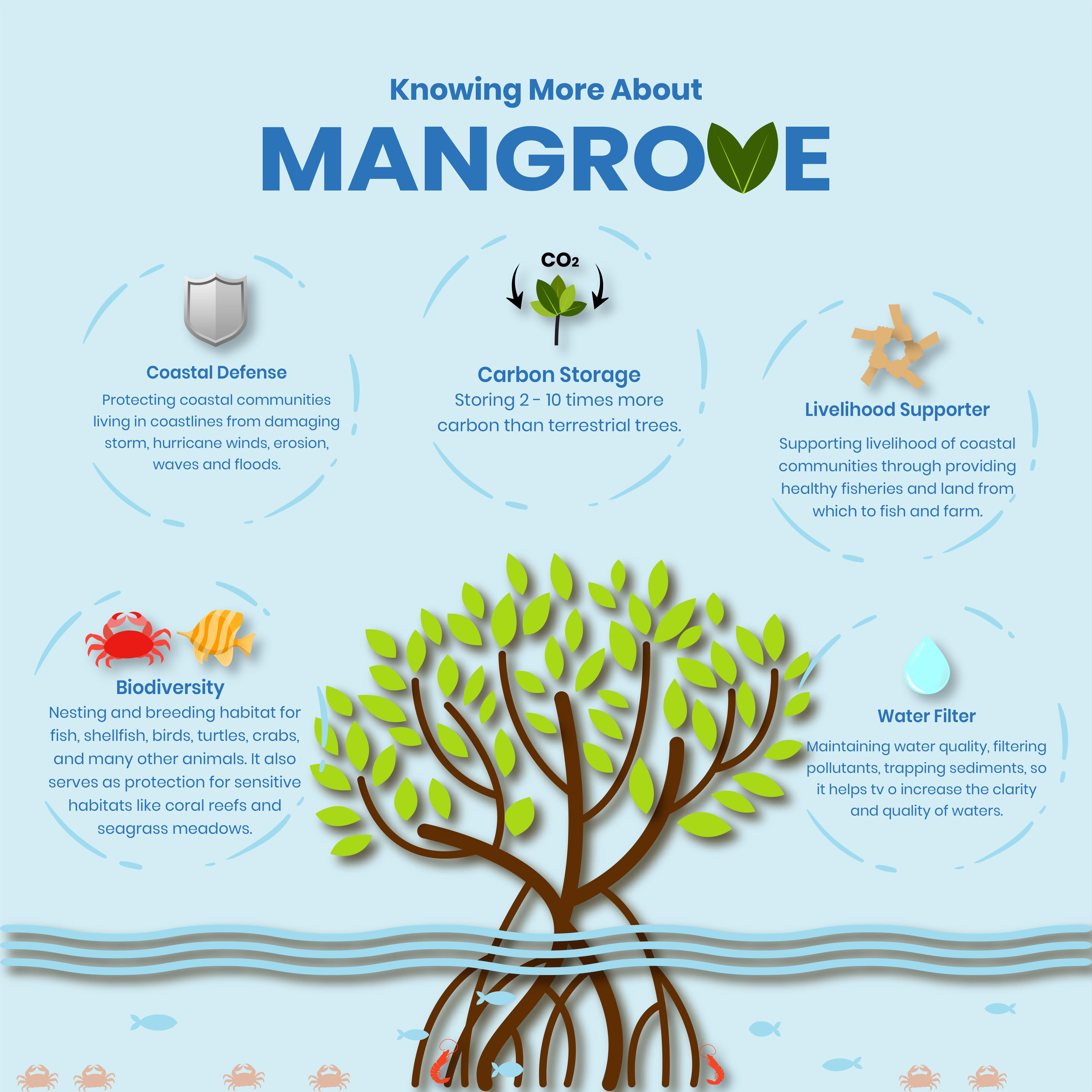 Blue Carbon - Mangrove