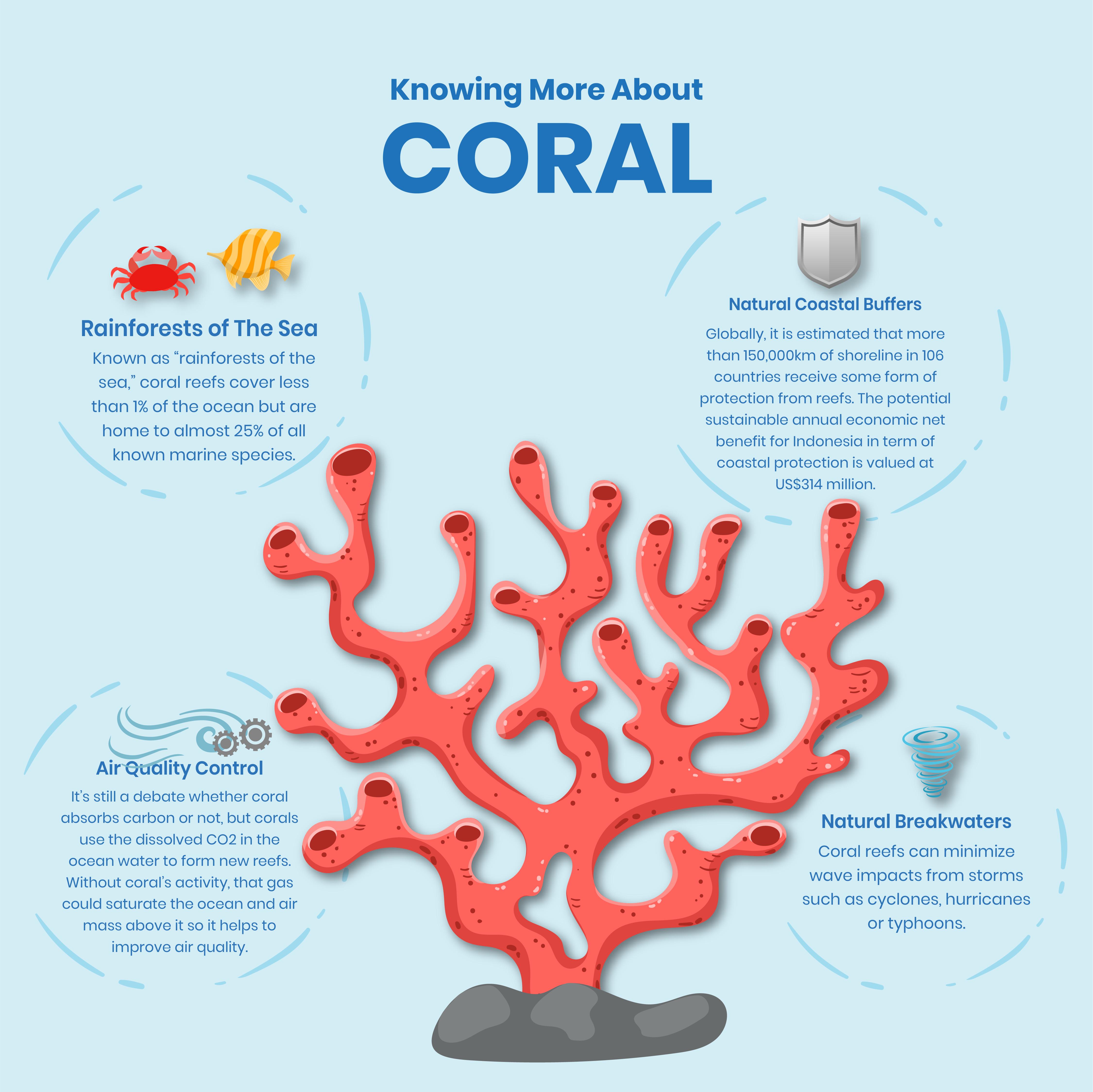 Blue Carbon - Coral