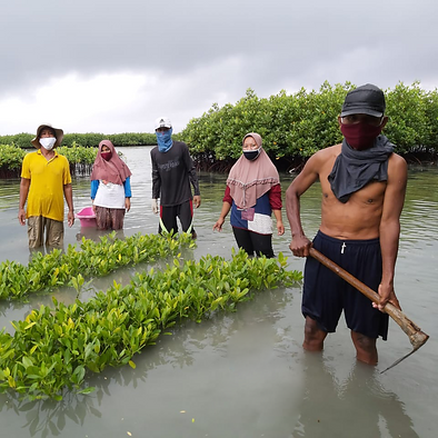 farmers and mangrove trees