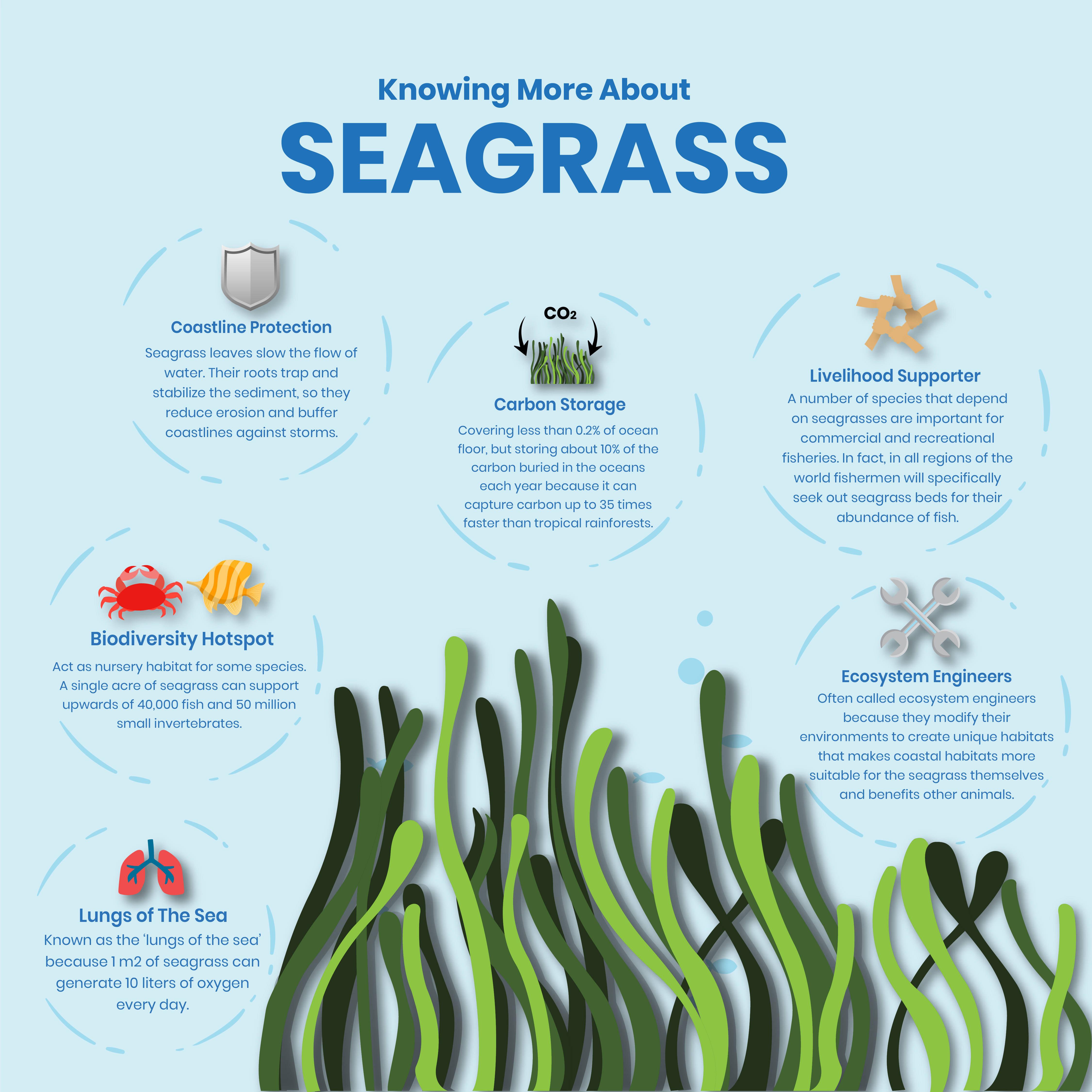 Blue Carbon - Seagrass