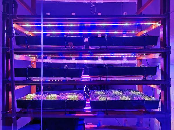 Microgreens_vertical_indoor.jpeg
