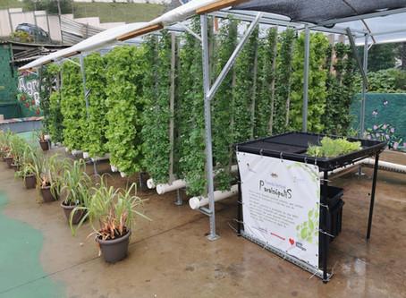 Paraisópolis ganha horta vertical comunitária