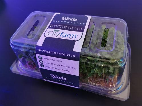 Microgreen Rúcula (50g) - Vivo