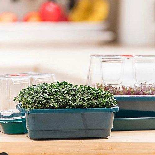 Kit Microgreens - Cultivo em casa