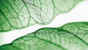 Notícias que destacam a movimentação da grande indústria de beleza em direção à sustentabilidade