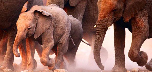 Kenya safari LodgesafariKenya