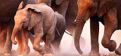 safari guides, safari books, safari travel guides, african safari guides, safari gifts, travel presents, travel gifts