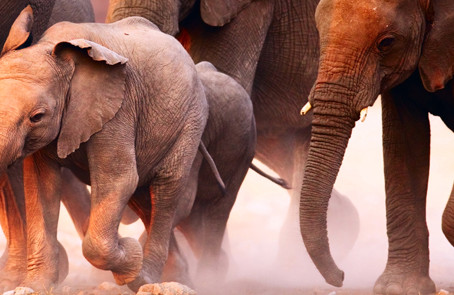 Three Elephants Blocking Our Healing