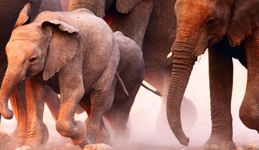 Le jour où j'ai rencontré un éléphant qui m'a bouleversée. Quels sont ses enseignements ?