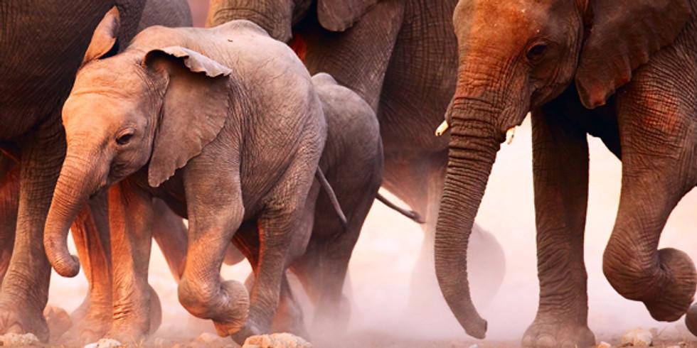 Elephant Storytime