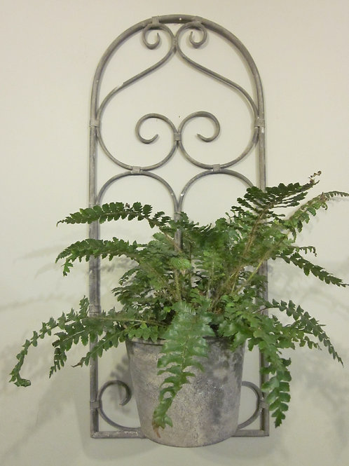 Wall hung planter with fern