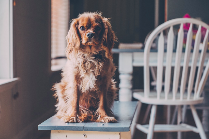 Why Your Dog Should Be Considered When Buying a New Home