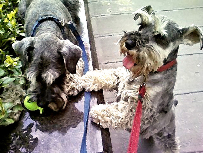 Canine PTSD: No. 4—Oddy & Penny