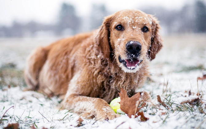 Teach Your Dog to Love Bad Weather!