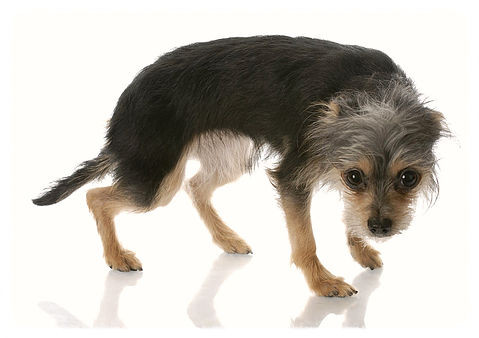 Canine PTSD: Its Causes, Signs & Symptoms