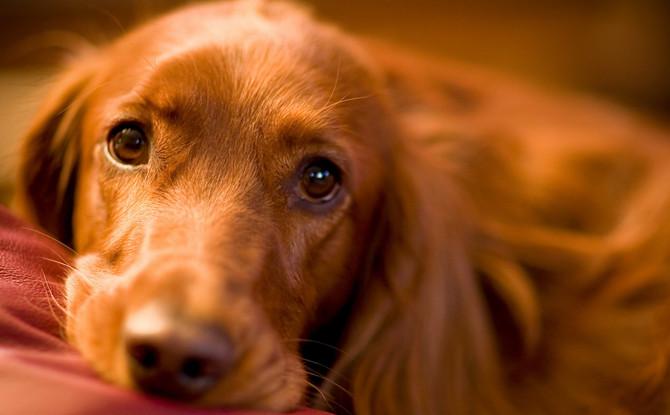 "Do Dogs Have a ""Mind's Eye?"""