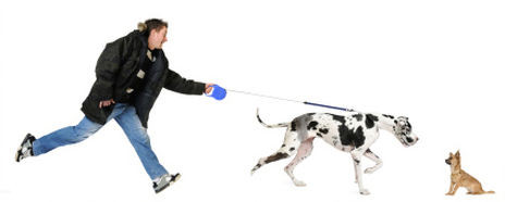 Why Dogs Pull on the Leash