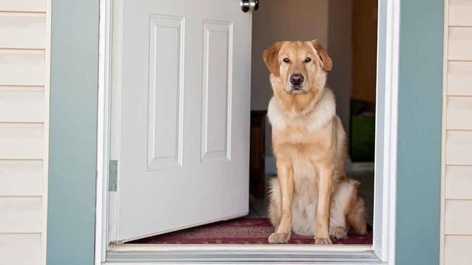 Understanding Dogs and Doorways 2