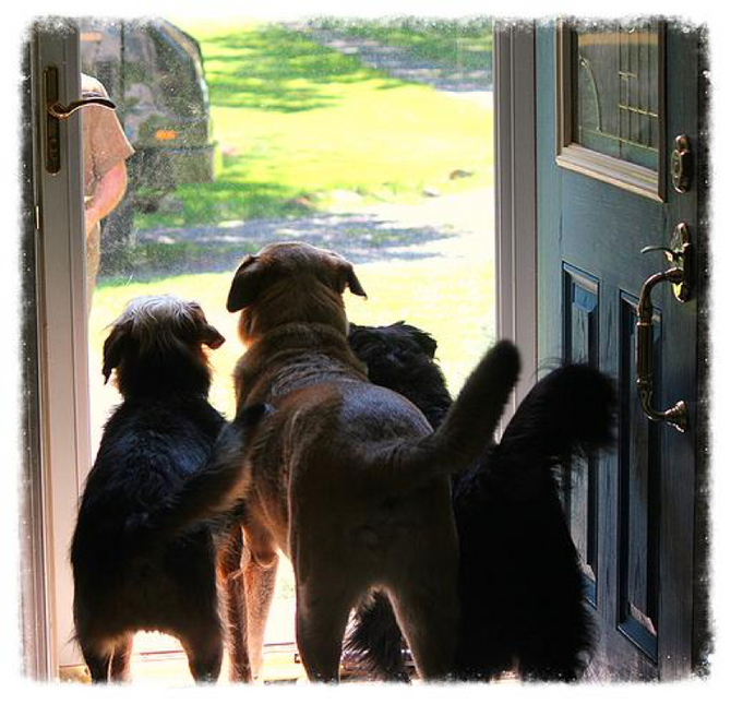 Dogs and Doorways, Part 1