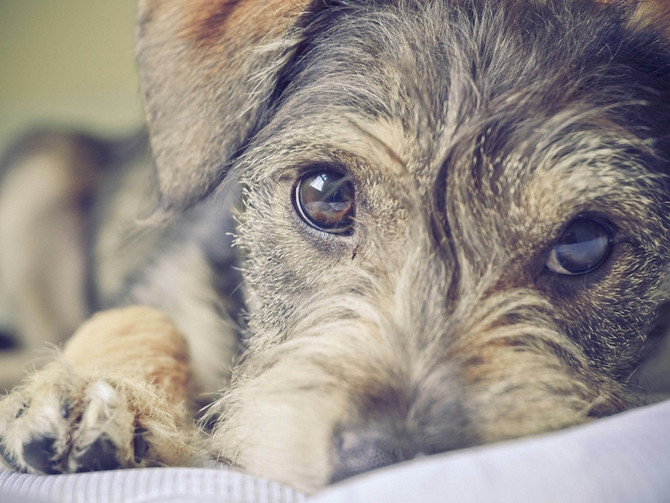 An Open Letter to New York Dog Trainers, Part 2