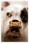 """Case History No. 2—Fancy the Boxer"""