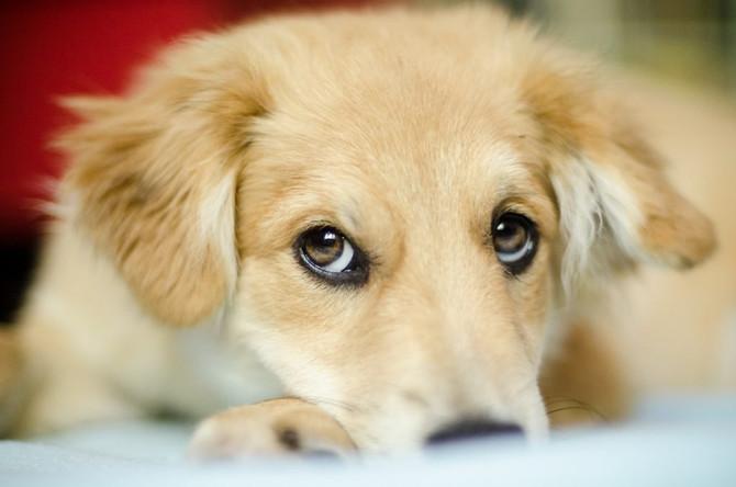 Do Dogs Use Body Language to Communicate?