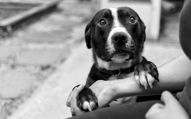 """The Canine-Human Bond: Honoring a Fallen Hero."""