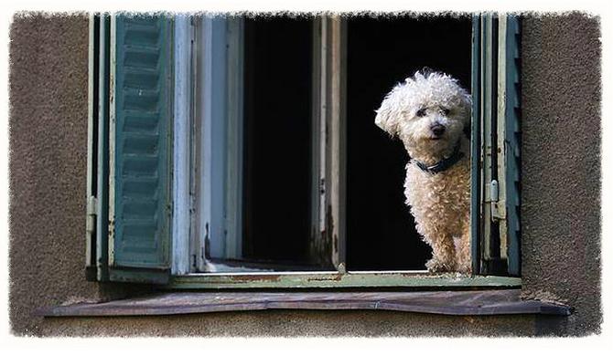 """""""The Canine-Human Bond: Loving a Narcissistic Dog."""""""