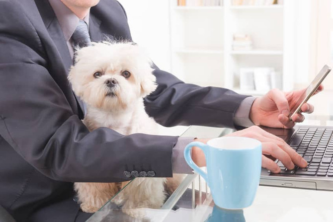 Bringing Dogs to Work Increases Social Cohesion