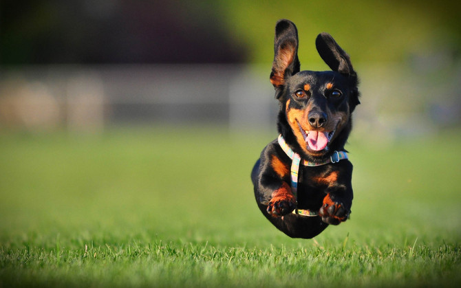 Three Forms of Dog Training