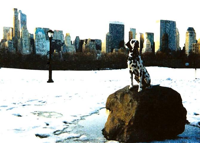 """Canine PTSD: Case History 1."""