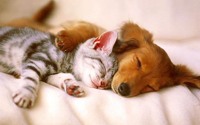 """Unified Dog Theory 7: Women, Oxytocin & Domesticated Dogs."""