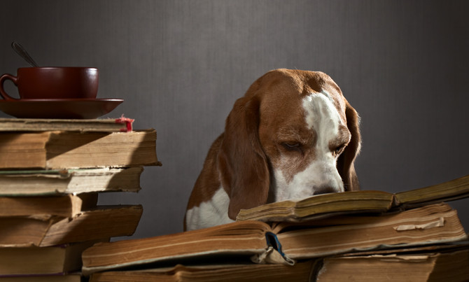 """Unified Dog Theory 11: Do Puppy Classes Cause Learning Deficits?"""