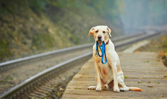 """""""Emotional GPS: How Lost Dogs Find Their Way Home."""""""