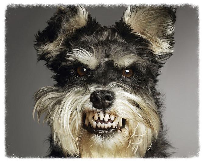 """Canine PTSD: Case History No. 4—Oddy & Penny."""