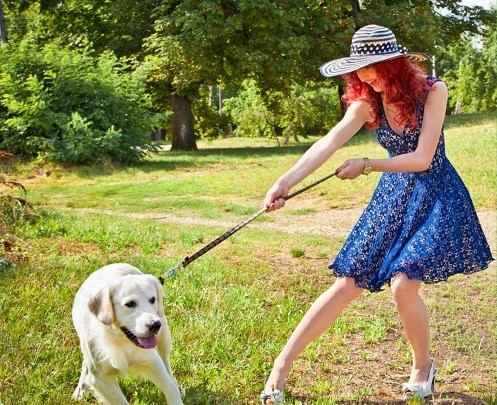 """Canine Cathexis: Why Dogs Pull on the Leash."""