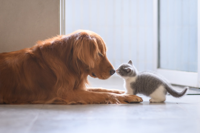 The Truth About Cats & Dogs.
