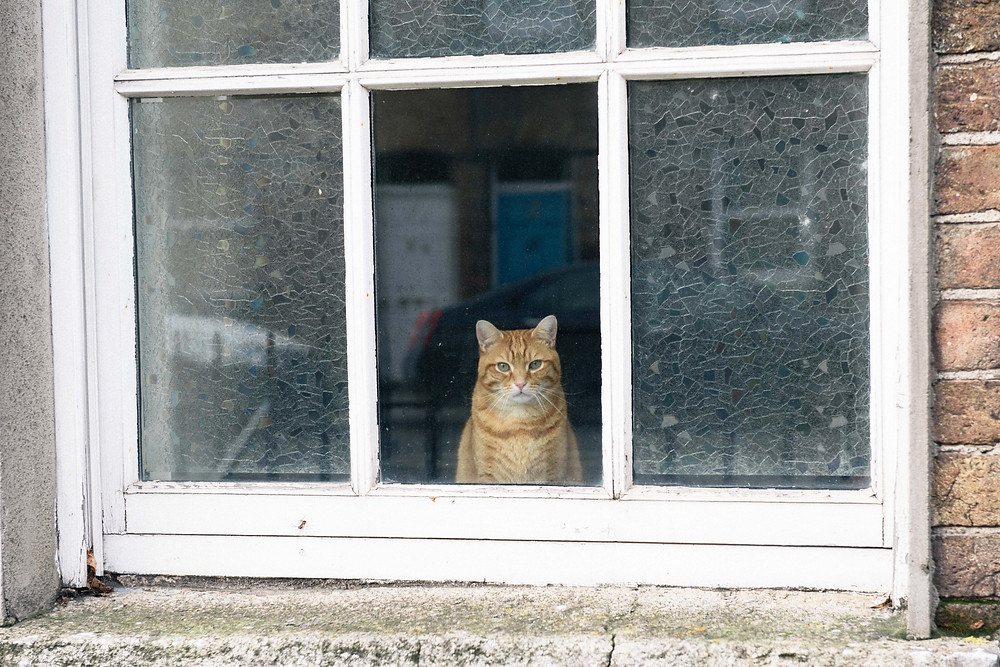 a cat by a window