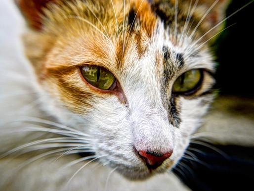 老貓怎麼這麼瘦?|Muscle Loss in Senior Cats