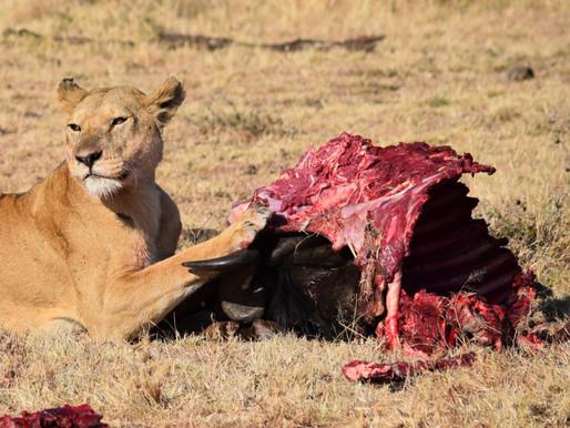 肉、骨頭與內臟