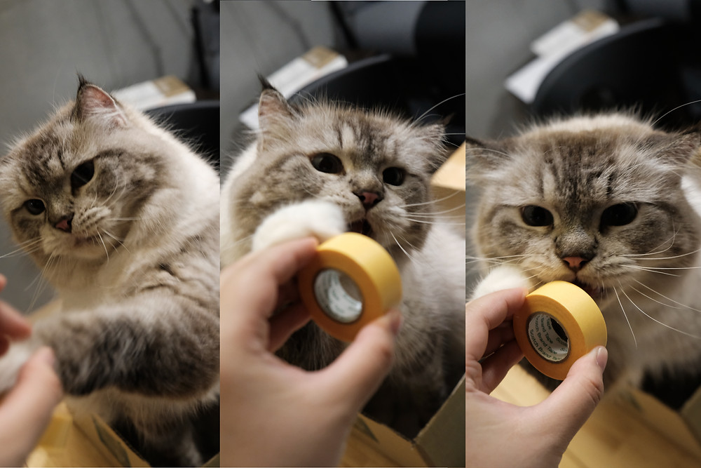 a three frame photo of a cat playing with a roll of tape