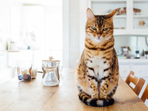 貓咪體重的重要性