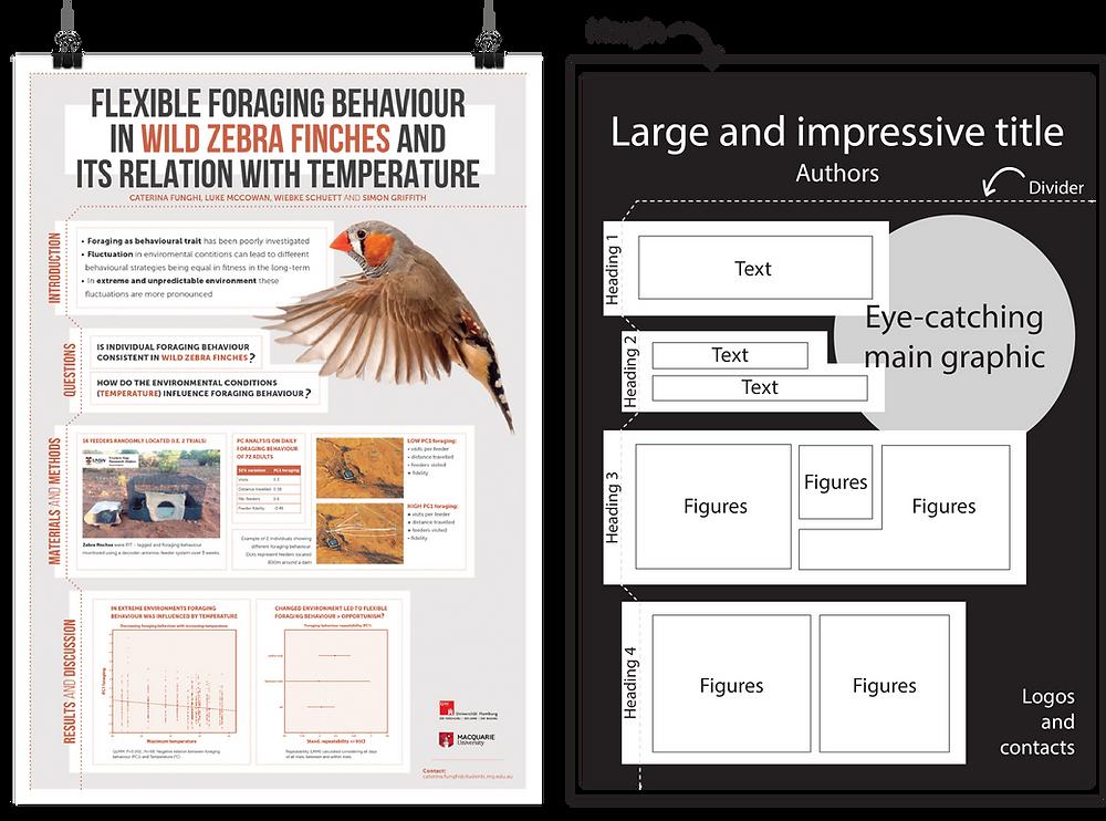 scientific poster finches