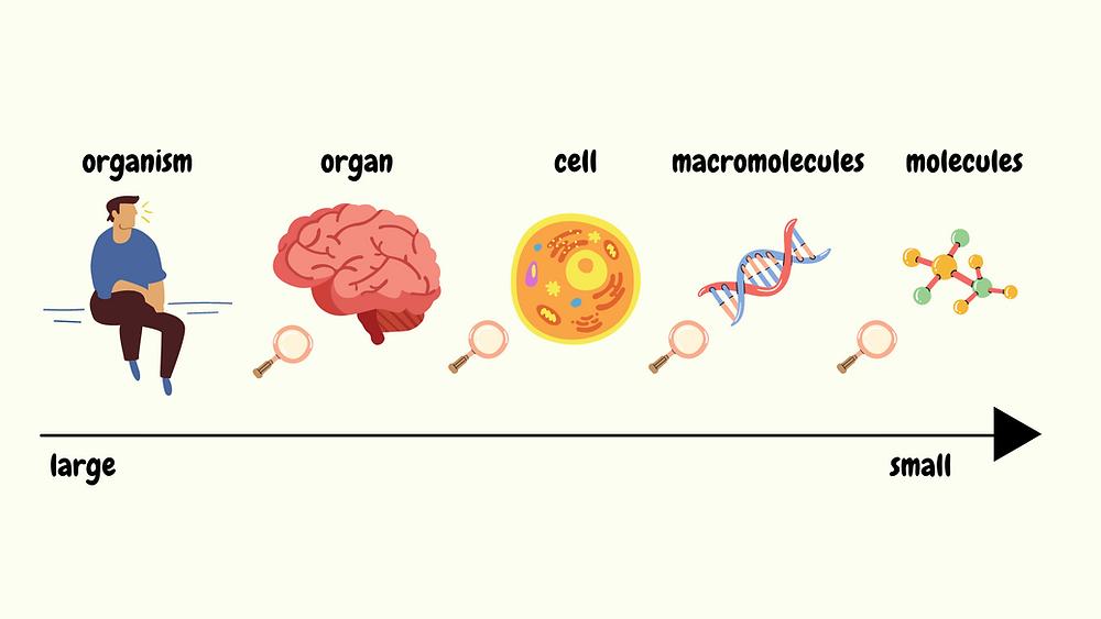 canva scientific illustration
