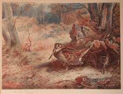 Archibald Thorburn 1860 - 1935