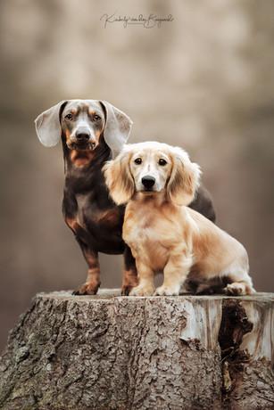 Paco & Cody