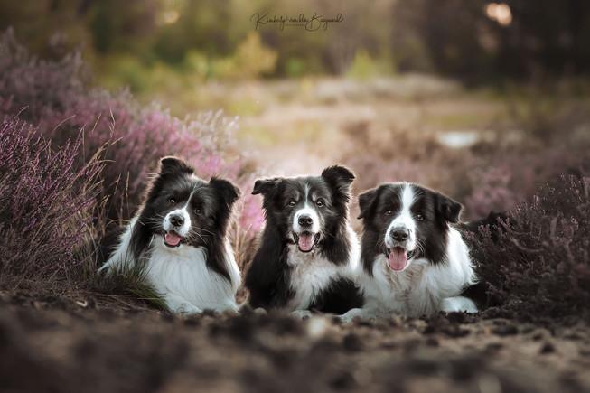 Mell, Jopp & Moss
