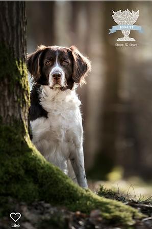 Award - Hond